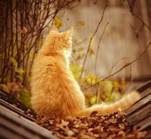 Осенняя хандра у домашних животных