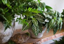 Как выбирать комнатные растения