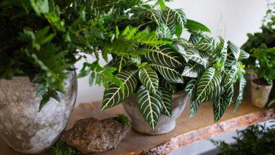 Photo of Как выбирать комнатные растения