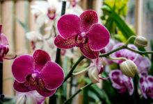 Photo of Выращивание орхидей в домашних условиях