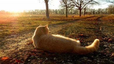 Photo of Как подготовить домашних животных к наступлению зимы