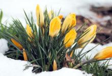 Строим планы на весну