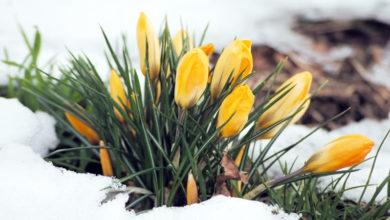 Photo of Строим планы на весну