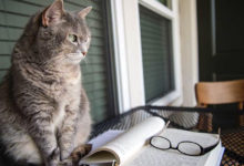 Память приходит кошкой