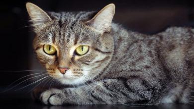 Photo of Кошка