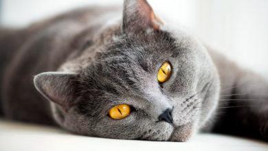 Кошка, хочешь, я дам тебе слово?