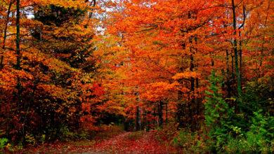 Photo of Осень