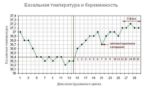 Базальная температура при беременности