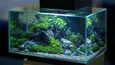 Photo of Подготовка воды для аквариума