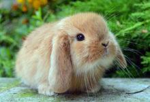 Photo of Чем кормить декоративного кролика