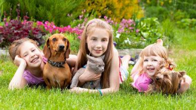 Photo of Домашние животные для детей