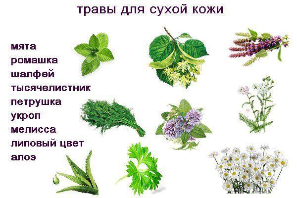 травы для сухой кожи лица