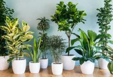Как ухаживать за комнатными растениями, чтобы они были украшением интерьера?