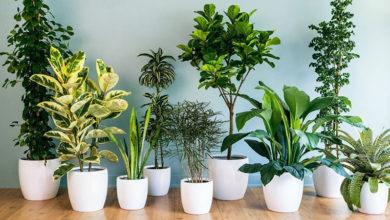 Photo of Как ухаживать за комнатными растениями, чтобы они были украшением интерьера?