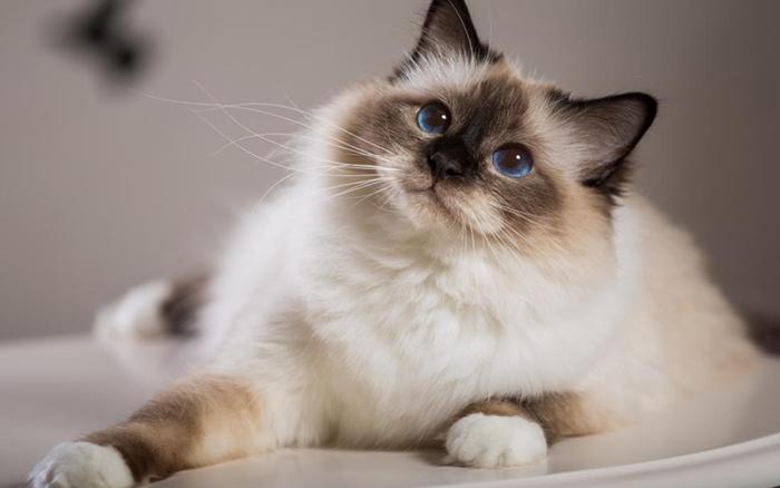 Кошки и женское здоровье