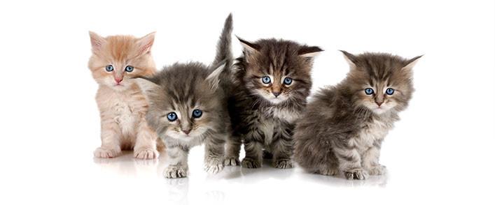 кошки и здоровье
