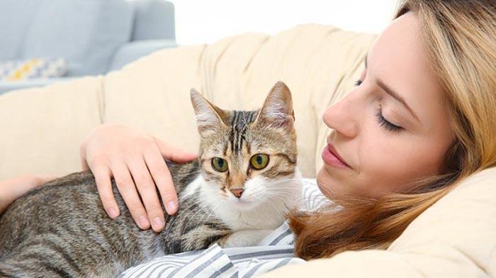 Кошки помогают укрепить иммунитет
