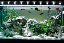 Photo of Подсветка аквариума светодиодной лентой