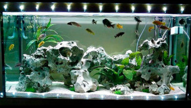 Освещение аквариума светодиодной лентой